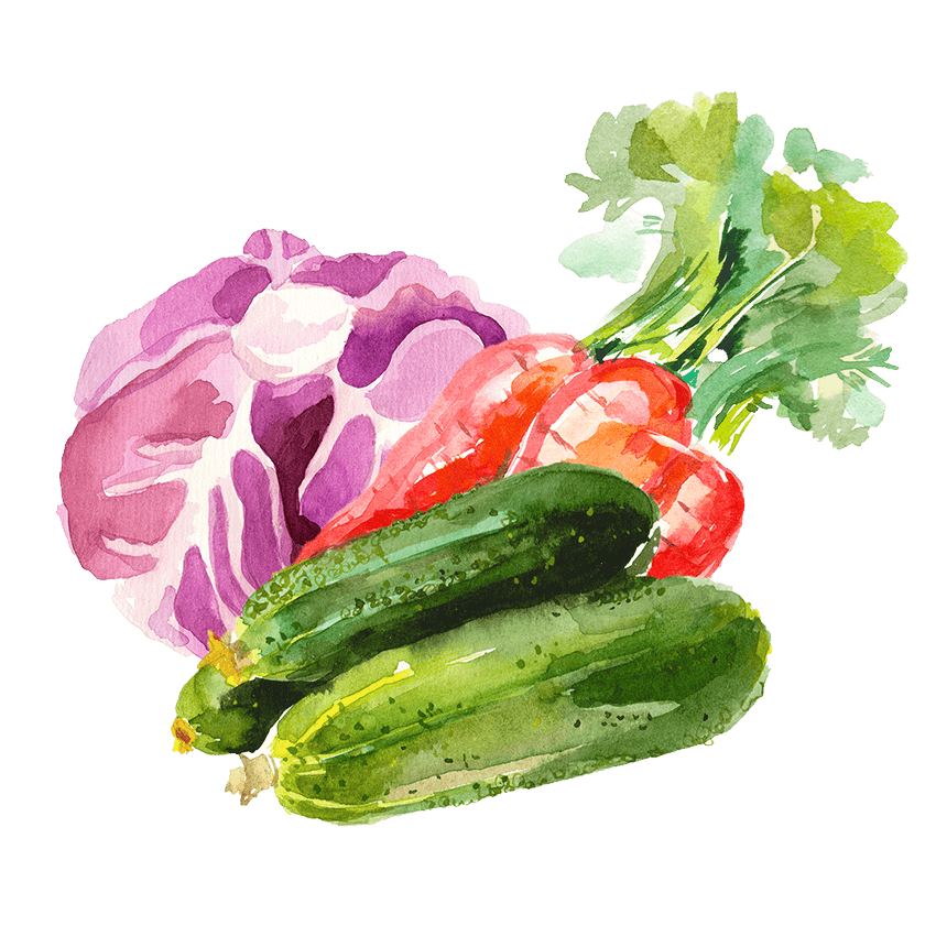 Watercolor illustration of a cabbage, carrots, and zucchini.