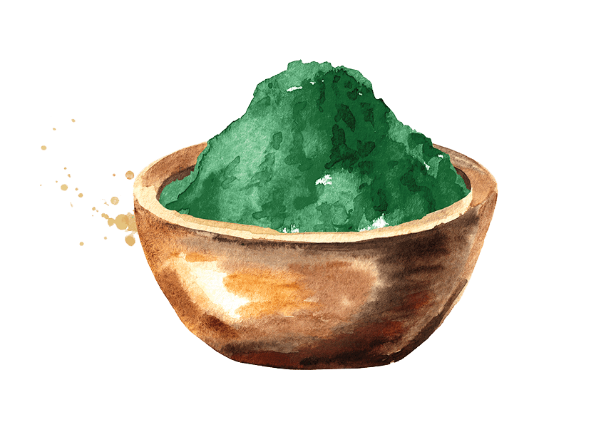Watercolor illustration of a green powder in a wooden bowl.