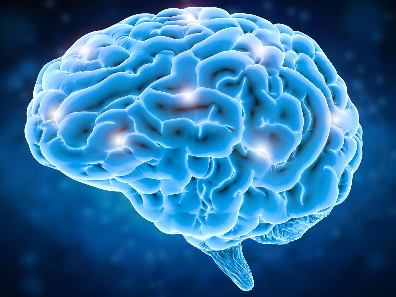 Research Identifies Complex Of Neurons >> Study Reveals Brain Activity Patterns Underlying Fluent Speech Uc