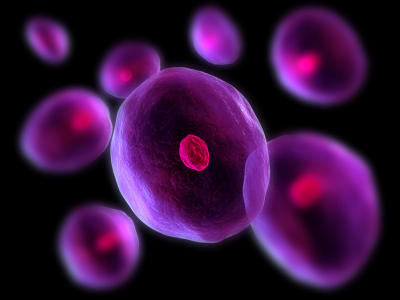 stem cell discovery furthers research on cell based therapy and