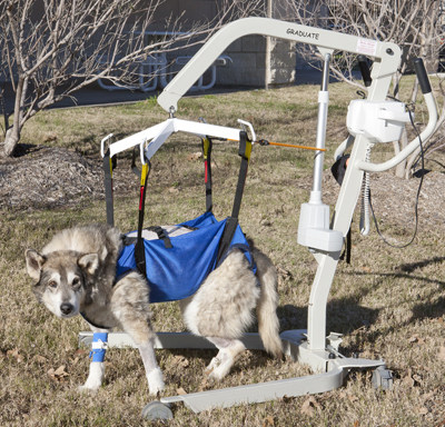 Dog in medical device