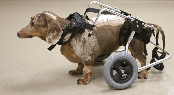 http://www.ucsf.edu/news/2012/01/11318/saving-dogs-spinal-cord-injuries