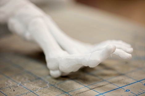 a 3-D printed model of a human skeletal foot