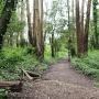 hiking trail on Mount Sutro