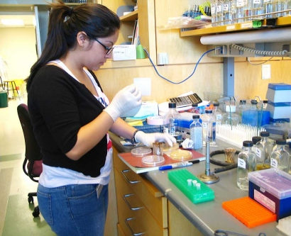 A high school intern with the UCSF Science & Health Education Partnership works in a lab.