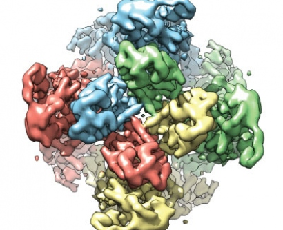Visualization of TRPV1 protein