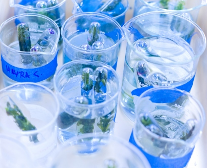 Myras Samples inside beakers