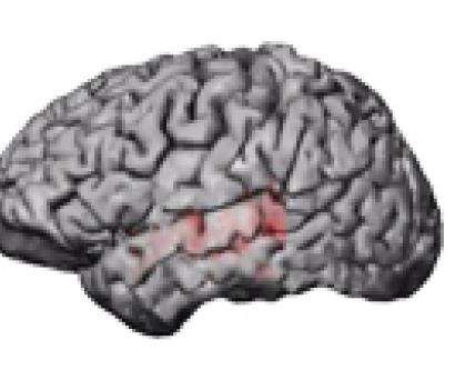 Digital illustration of brain focusing on activity in the temporal lobe