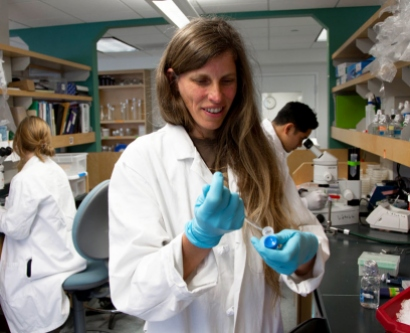 Noelle L'Etoile, PhD, places worms in petri dishes to study the cell biological  processes that promote and maintain sensory signaling and neuronal plasticity  throughout development.