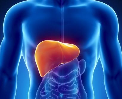 digital illustratation of liver inside a man