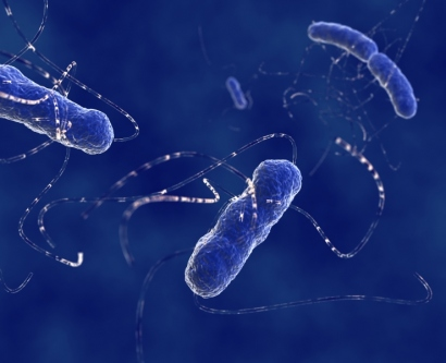 Illustration of E.coli bacteria in the human intestine