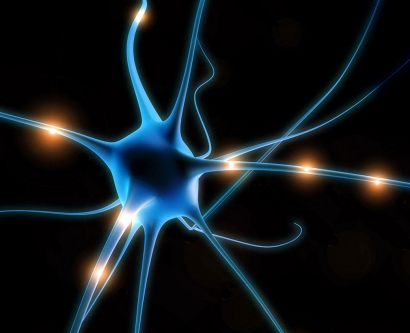 an illustration of neurons
