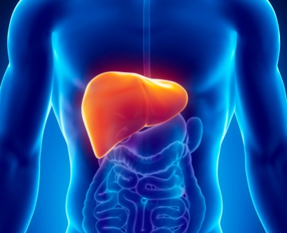 Digital illustration of liver in a man.