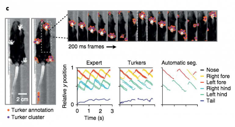 Images and graphs showing result similarities between experts and Turkers