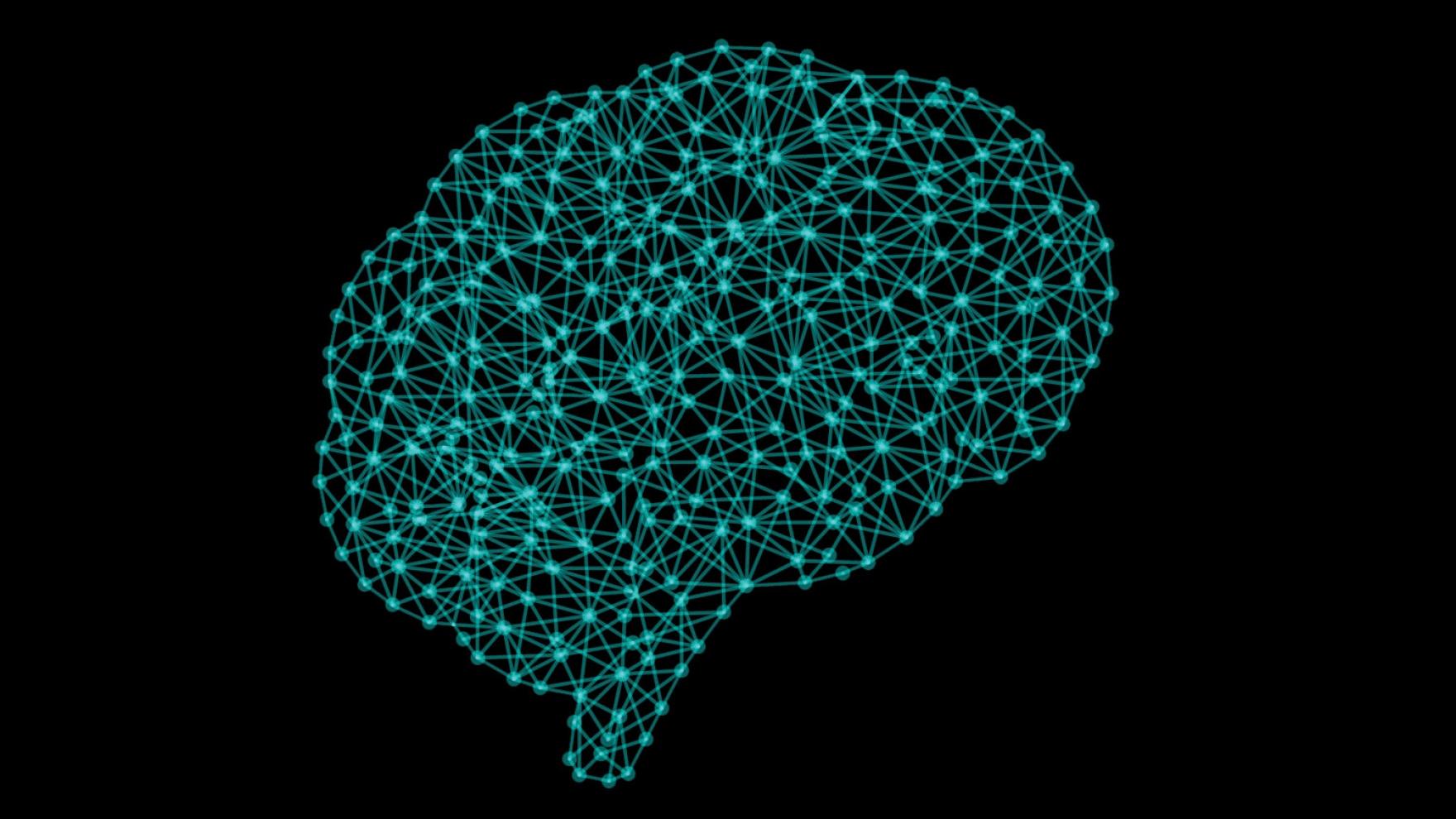 brain image network
