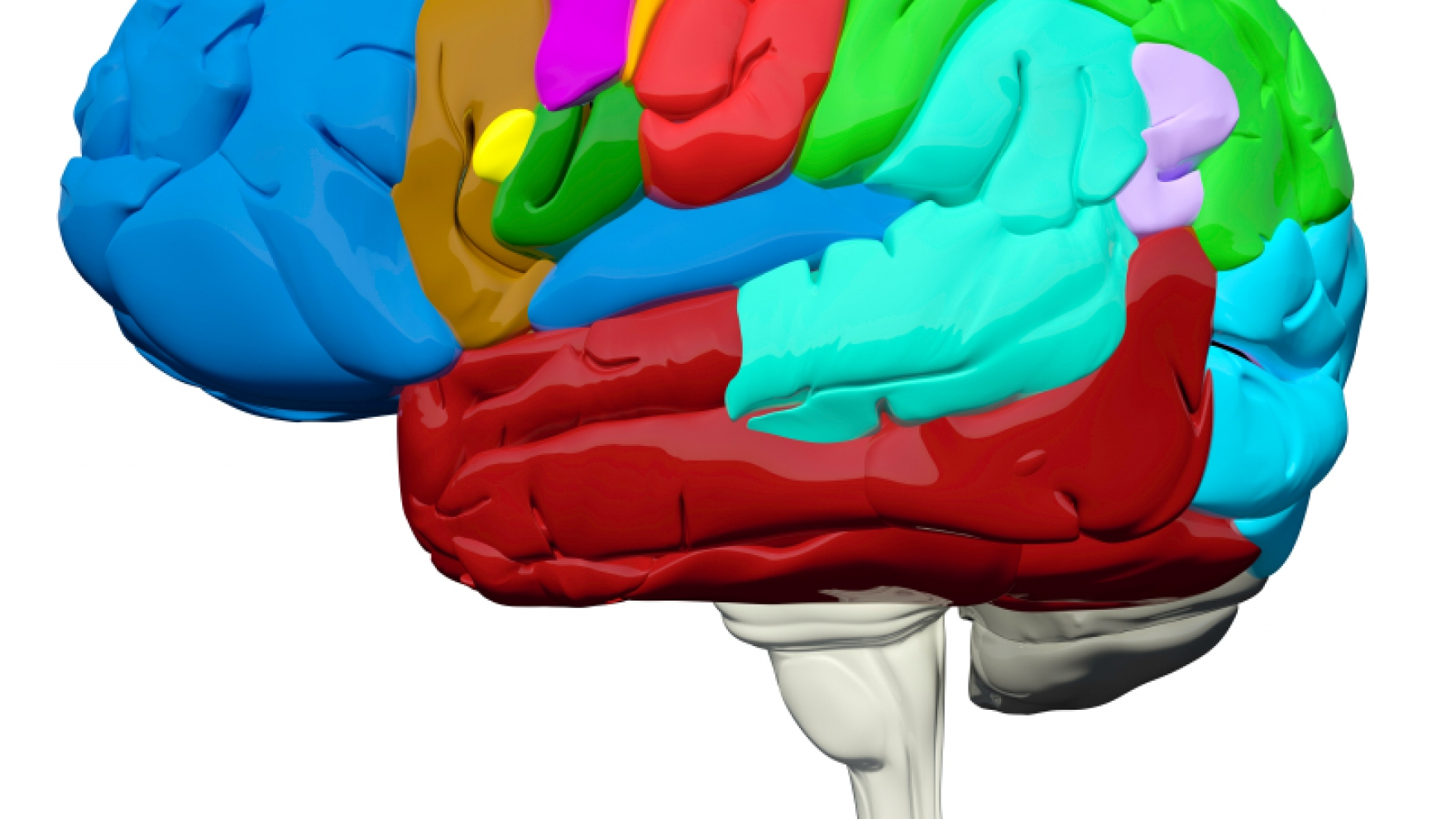 Cocaine Use Leads to Rapid Growth of New Mouse Brain Structures | UC ...