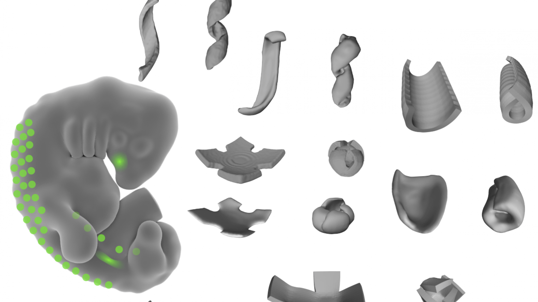 3d structures programmed by Gartner Lab