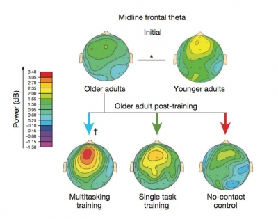 graphic showing increased brain activity for older adults