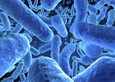how to get a diverse microbes