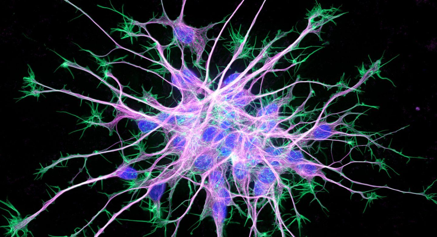 neuron stem cell