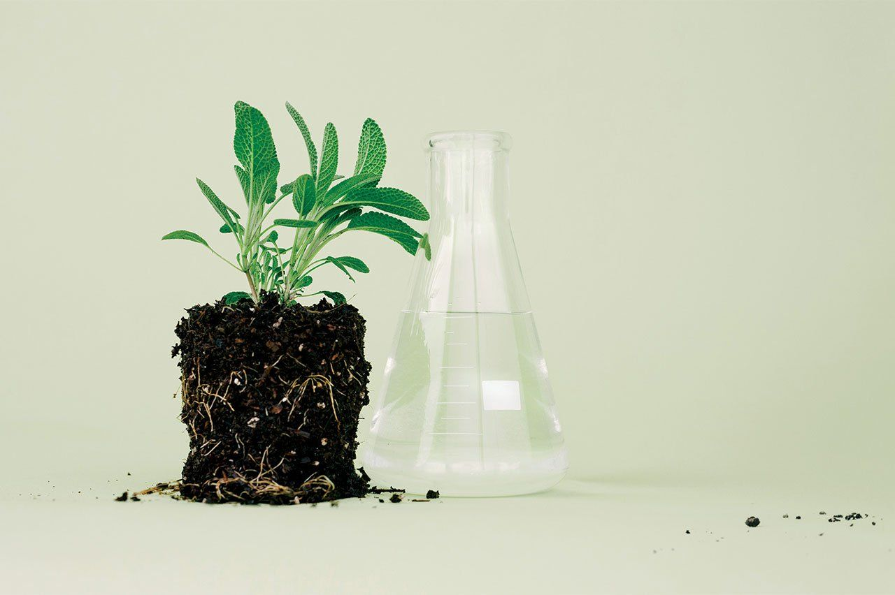 Photo of a small sage plant with soil and roots exposed, next to a beaker, in front of a blank green background.