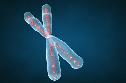 Illustration of chromosome.