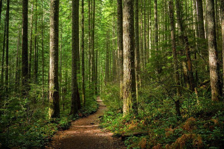 hiking trail through trees in a forest