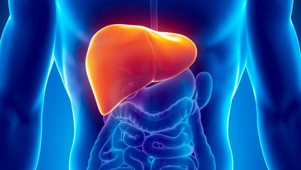 illustration-of-liver-in-man