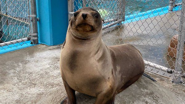 Cronutt the sea lion
