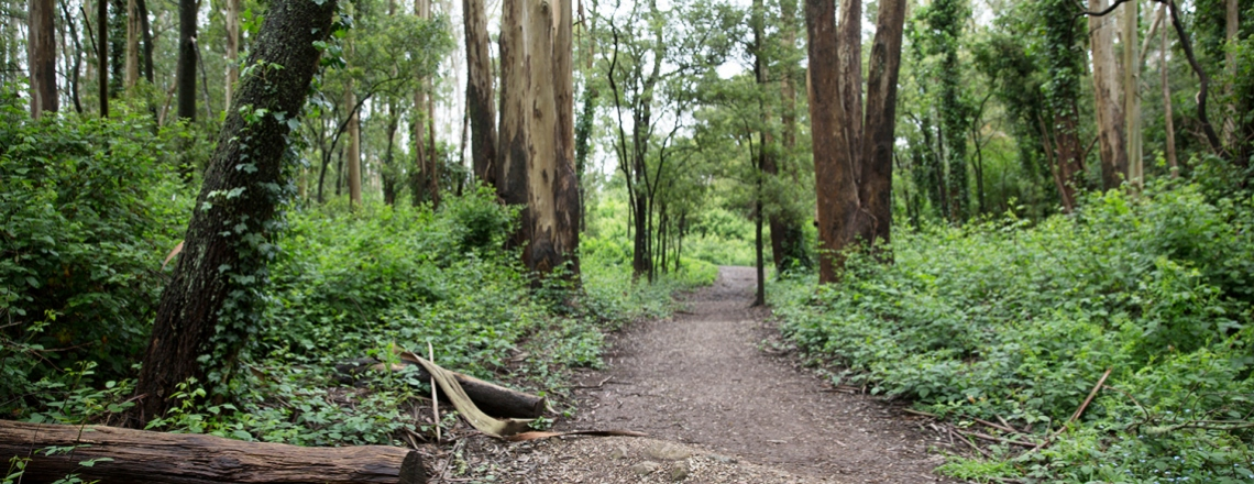 hiking trail on Mount Sutro