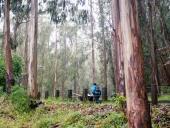A trail leading through trees on Mount Sutro
