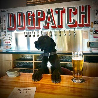 A fluffy black and white dog named Porter sits behind the bar with a pint next to his paw