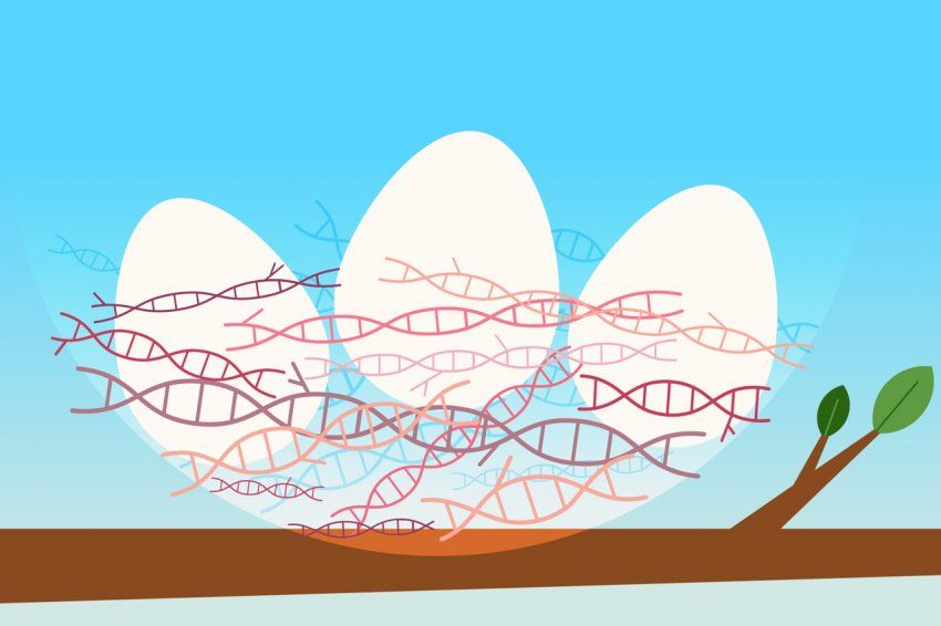 Illustration of eggs in a basket made of double helix dna strands.
